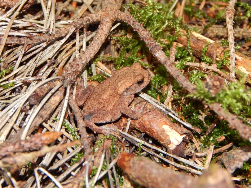 common tree frog_Katja Aust_Pixabay