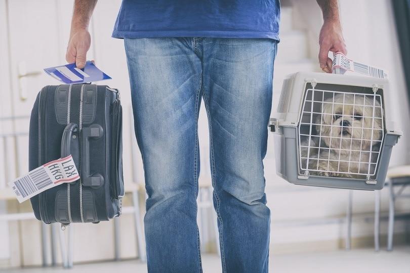 dog-in-the-airline-cargo-pet-carrier_Monika-Wisniewska_shutterstock