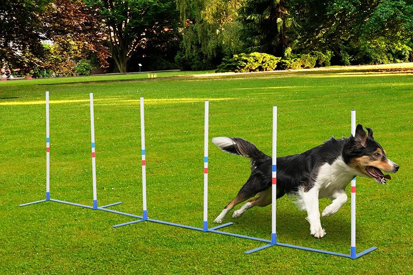 dog training with weave poles