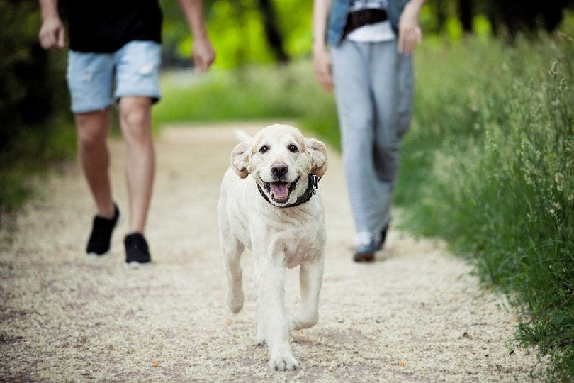 dog walking in the park