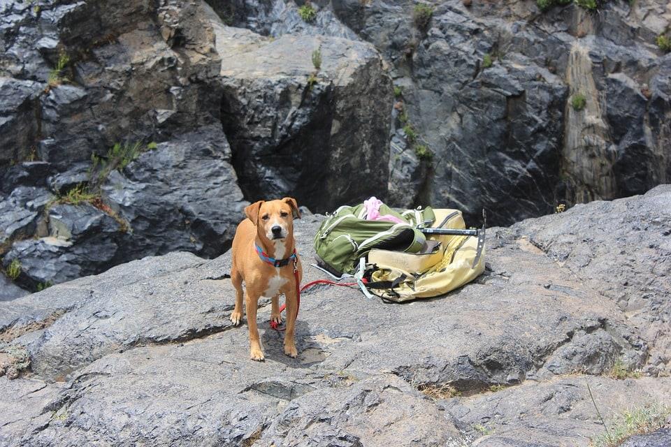 dog with hiking gears