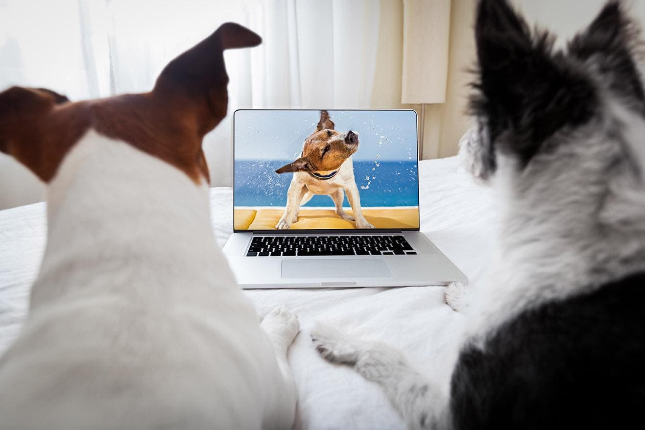 dogs watching