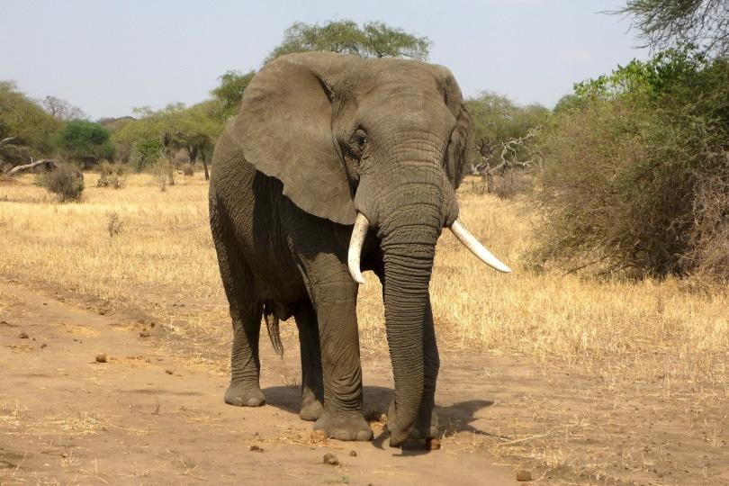 elephant_ajoheyho_Pixabay