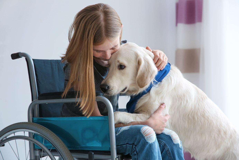 golden retriever as therapy dog