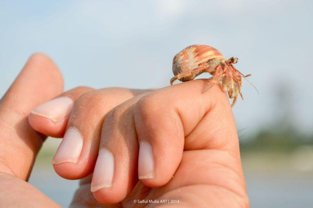 hermit crab in person's hand