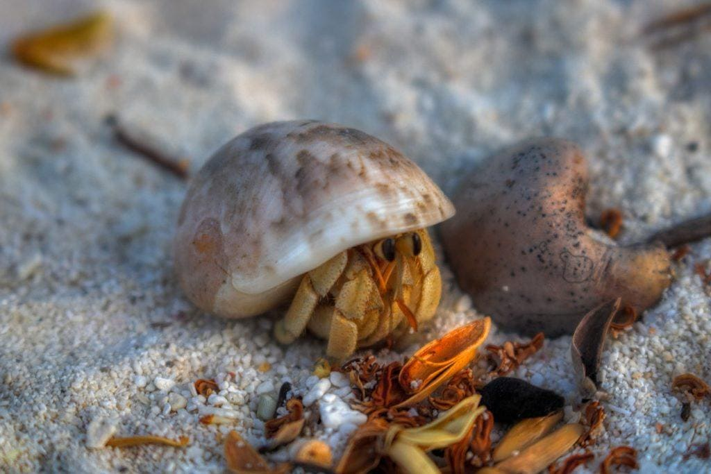 hermit crab in the sand