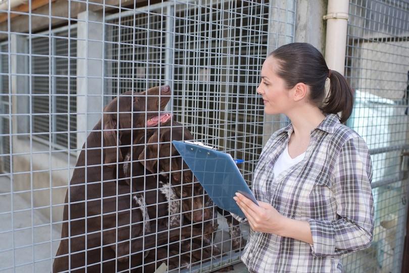 kennel-employee-is-checking-dogs_ALPA-PROD_shutterstock