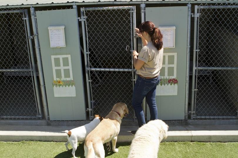 kennel-supervises-several-large-dogs_Jayme-Burrows_shutterstock