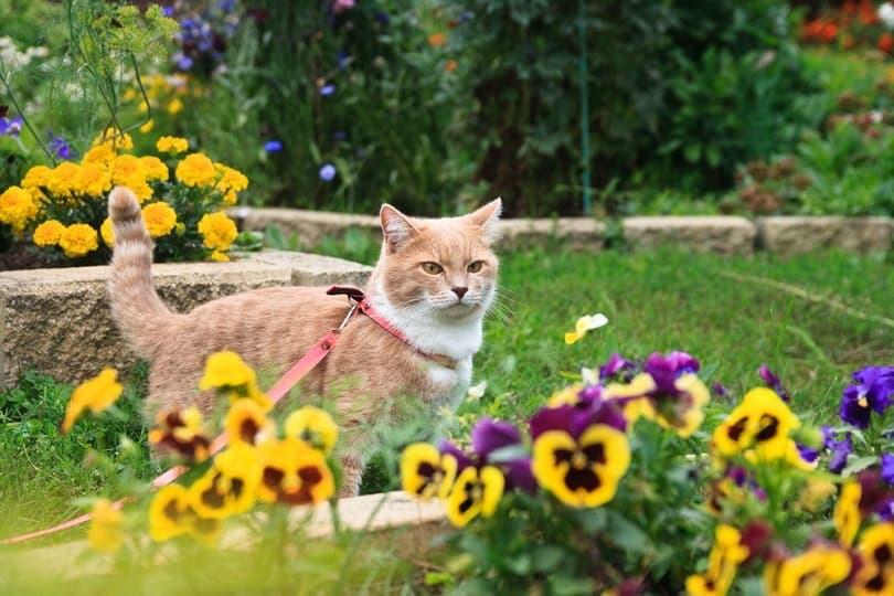 light-beige-cat-flower-bed_Irinka-osinka_shutterstock
