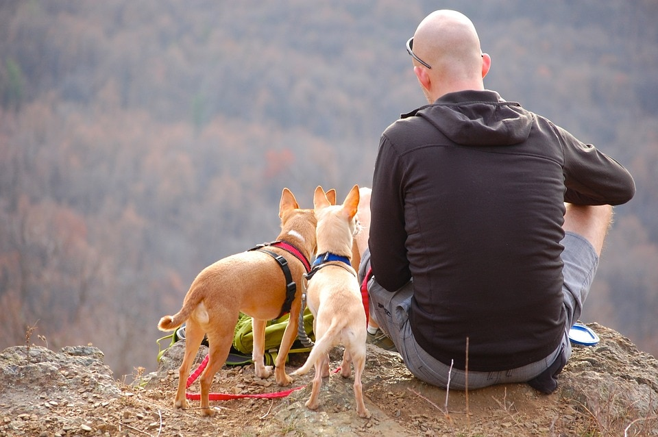 man and dogs go hiking