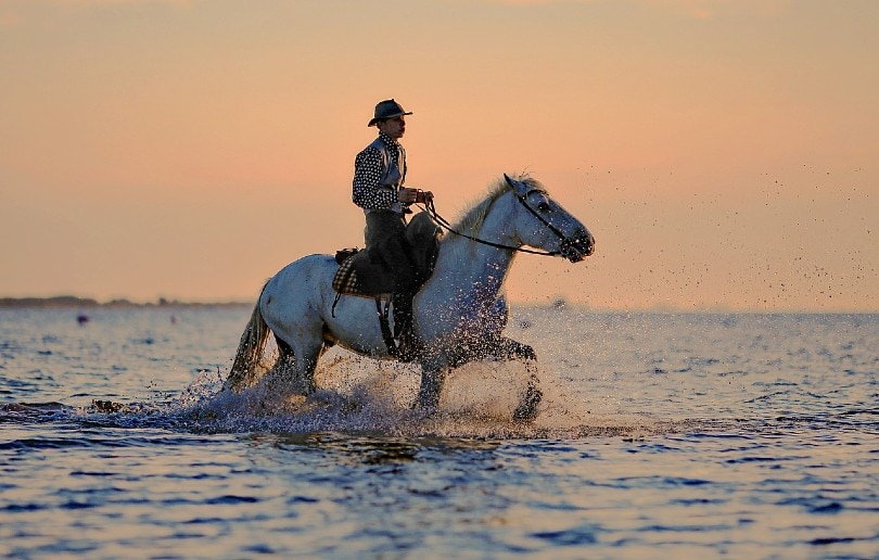 man riding a horse on water
