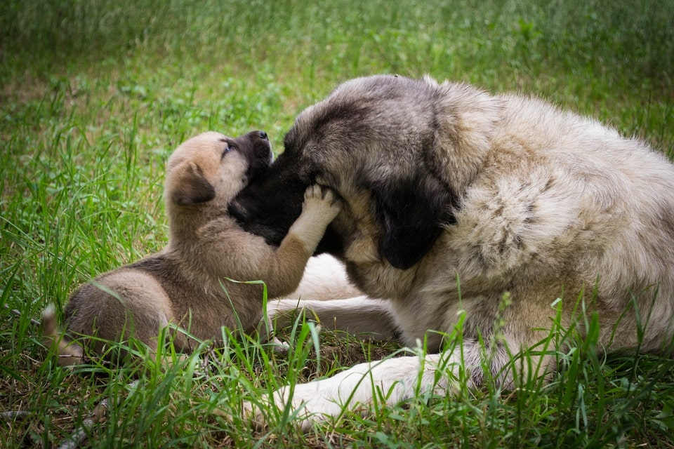 mother dog and puppy playing