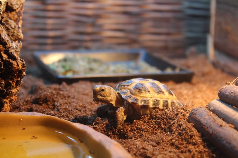 pancake tortoise habitat_Jenni Kantis_Pixabay