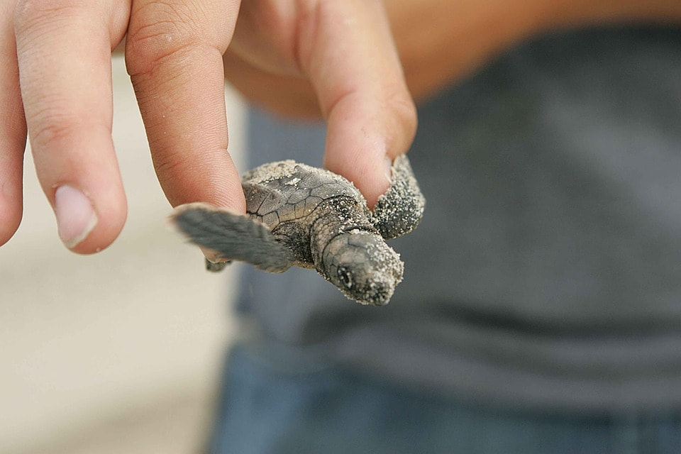person holding a baby turtle