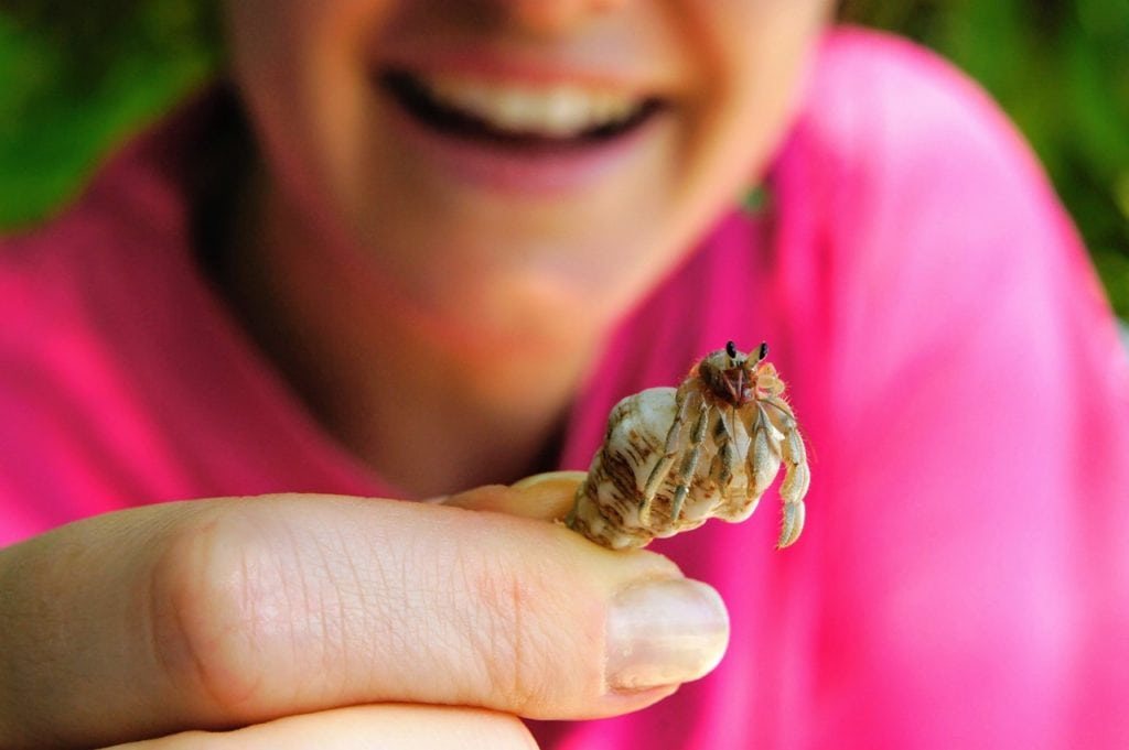 person holding a hermit crab