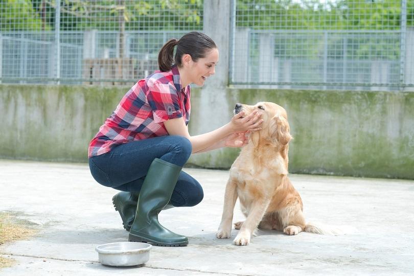 shelter-volunteer-feeding-the-dogs_ALPA-PROD_shutterstock