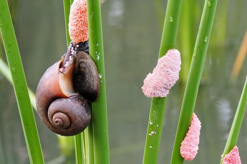 snail egg_Piqsels