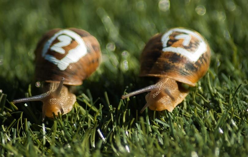 snail racing_jacqueline macou_Pixabay