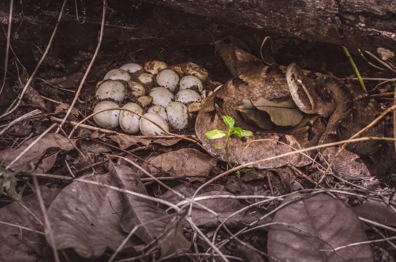 snake nest_Aree_Shutterstock
