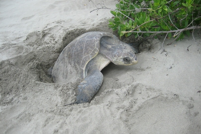 turtles nest_ionlera_Pixabay