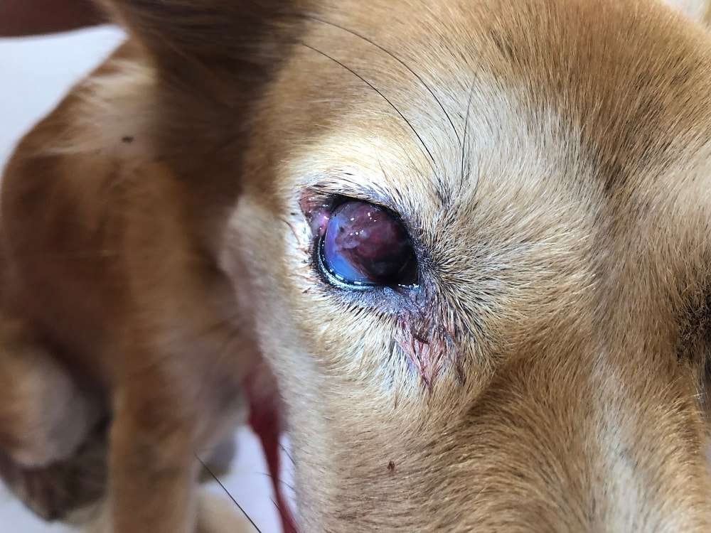 wimala namket_shutterstock_corneal wound