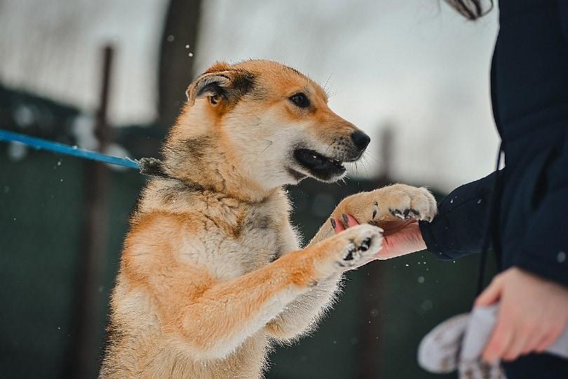 woman petting dog on a leash