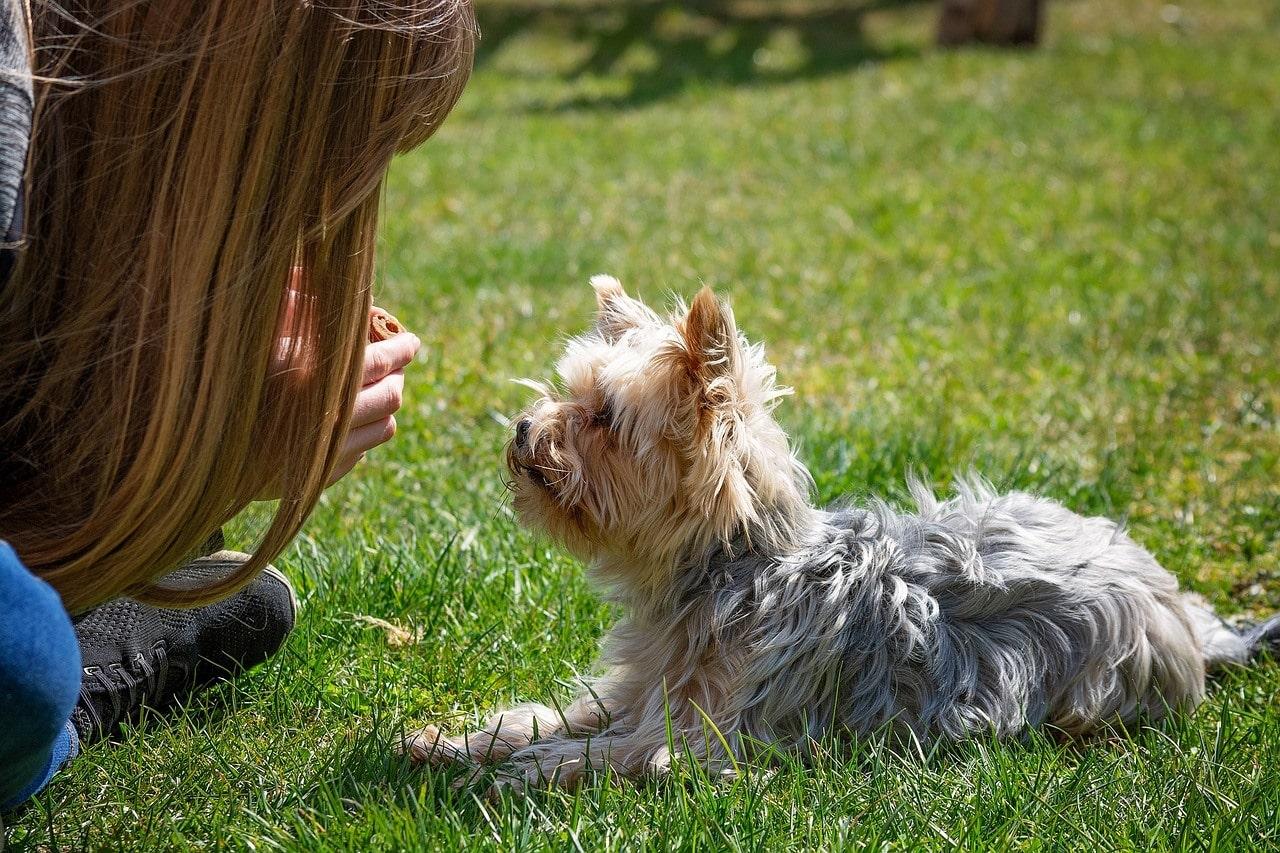 woman teaching a terrier