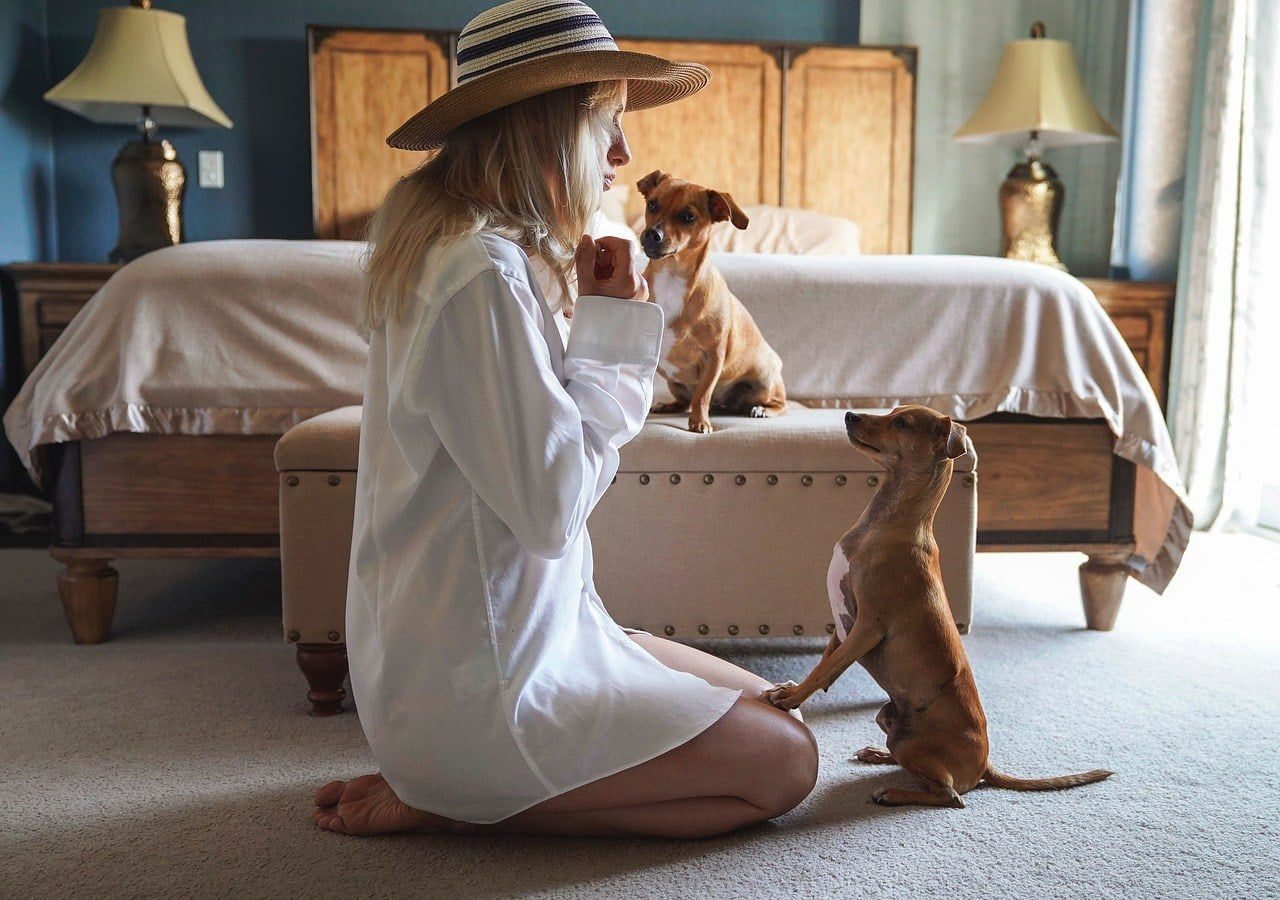 woman teaching dog