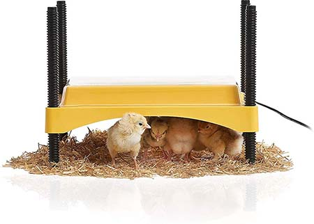 Brinsea EcoGlow Safety 600 Chick and Duckling Brooder
