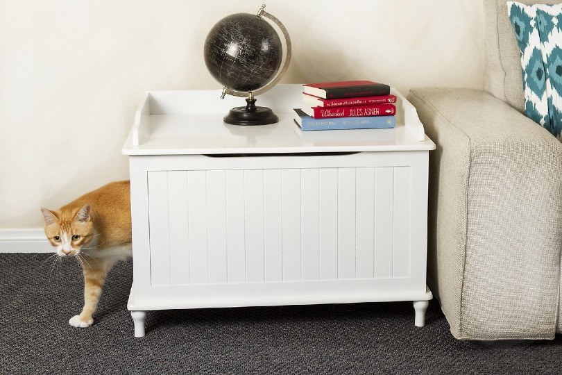 Cat Beside White Furniture