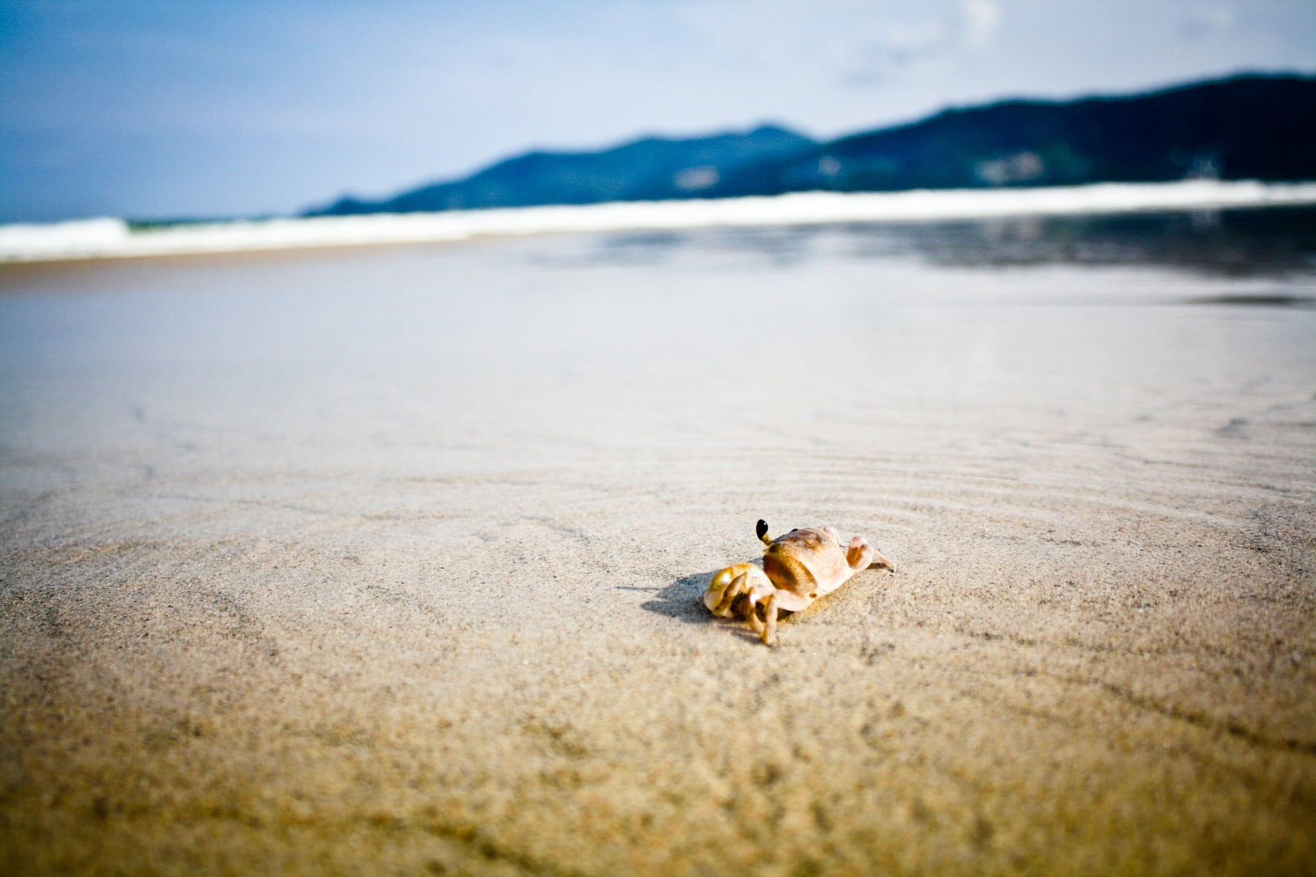 Crab in the sea