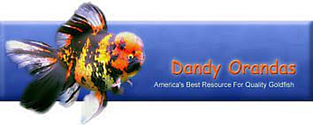 Dandy Orandas logo