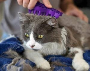 KONG Cat Zoom Groom Brush