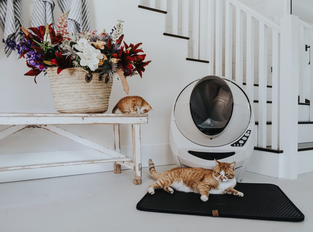 Orange Cats in white home with Beige Litter-Robot.