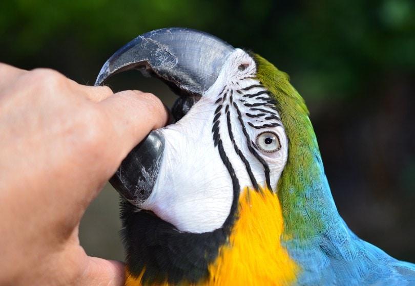 Parrots Bite Hand