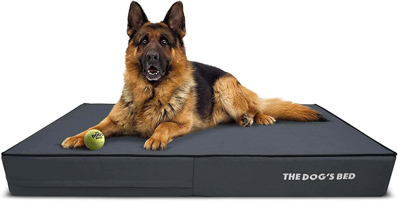 The Dog's Balls Orthopedic Dog Bed