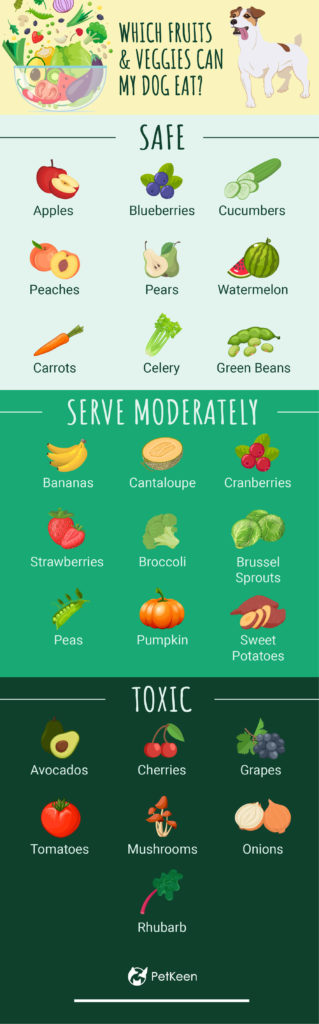 which fruits and veggies can dogs eat?