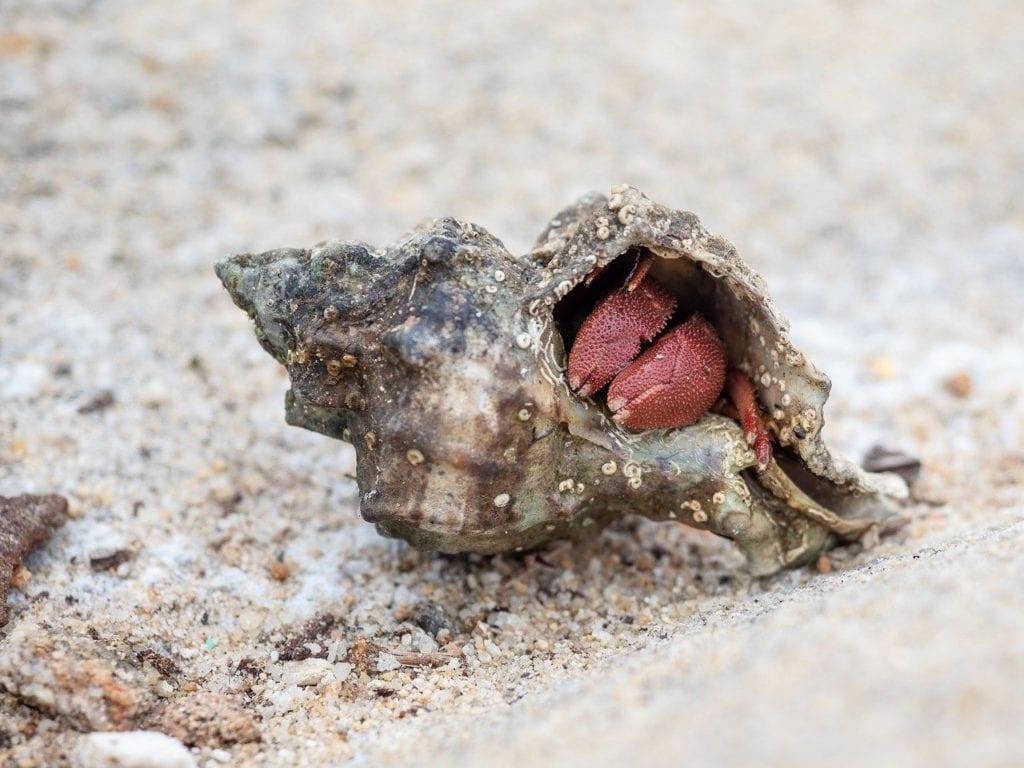 a hermit crab sleeping