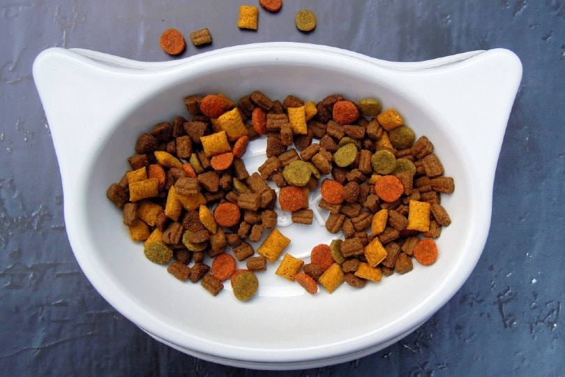 Cat Food in cat size bowl