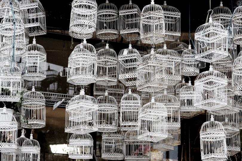 birds cage_Piqsels