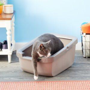 cat in Catit Cat Pan with Rim