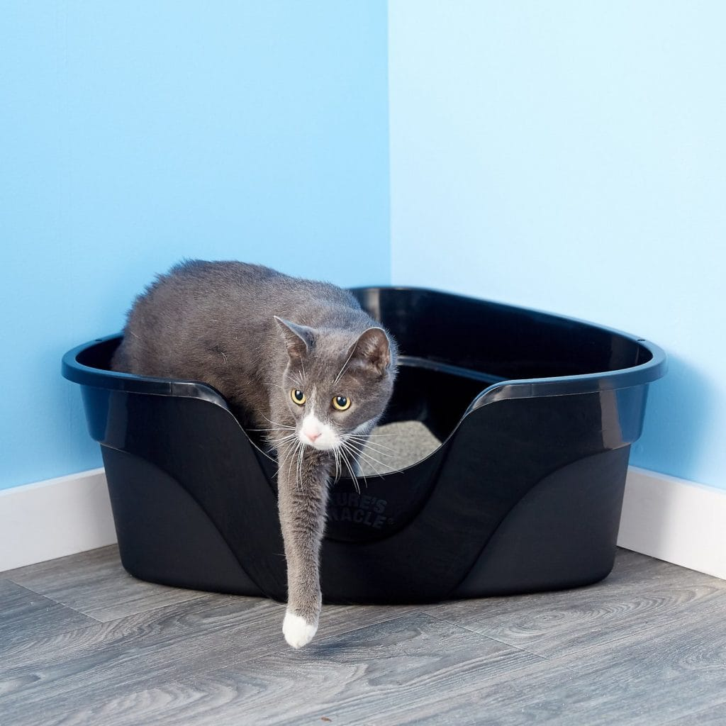 cat in Nature's Miracle Just For Cats Advanced High Sided Corner Cat Litter Box