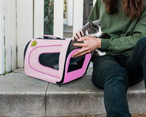 cat in Pet Magasin Soft-Sided Airline-Approved Dog & Cat Carrier Bag