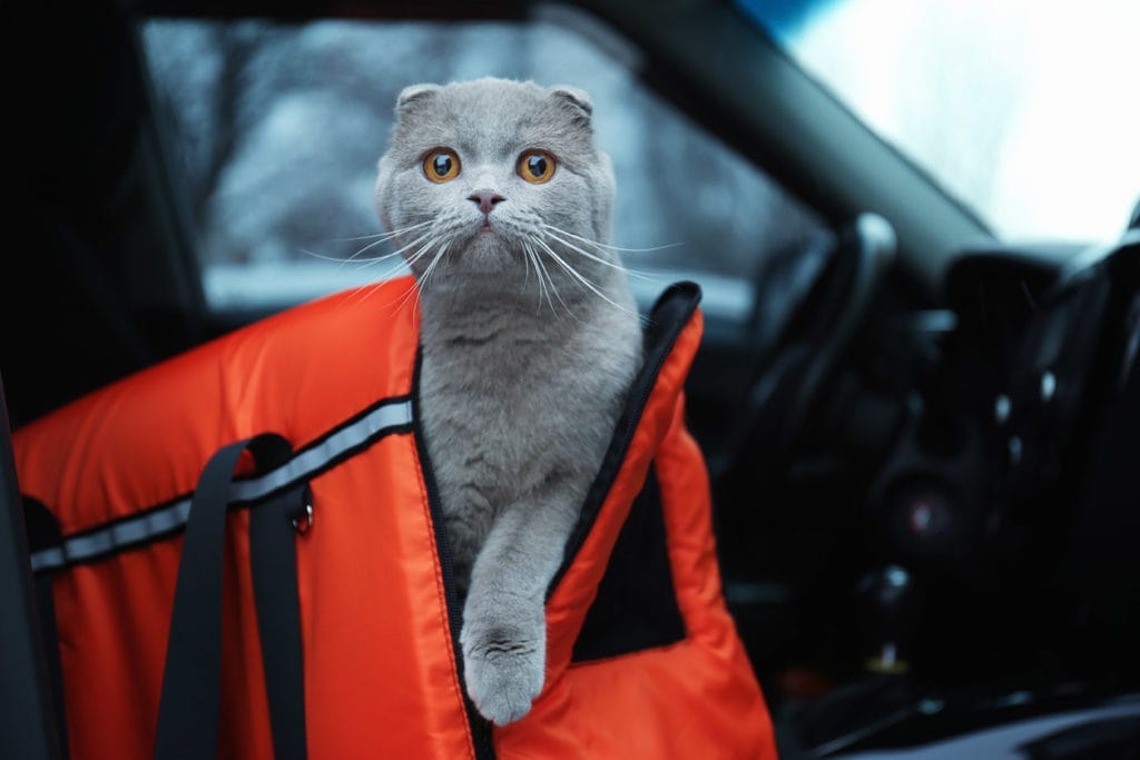 cat in a carrier inside the car