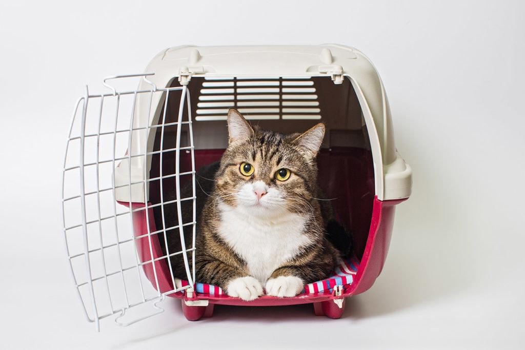 cat inside a carrier