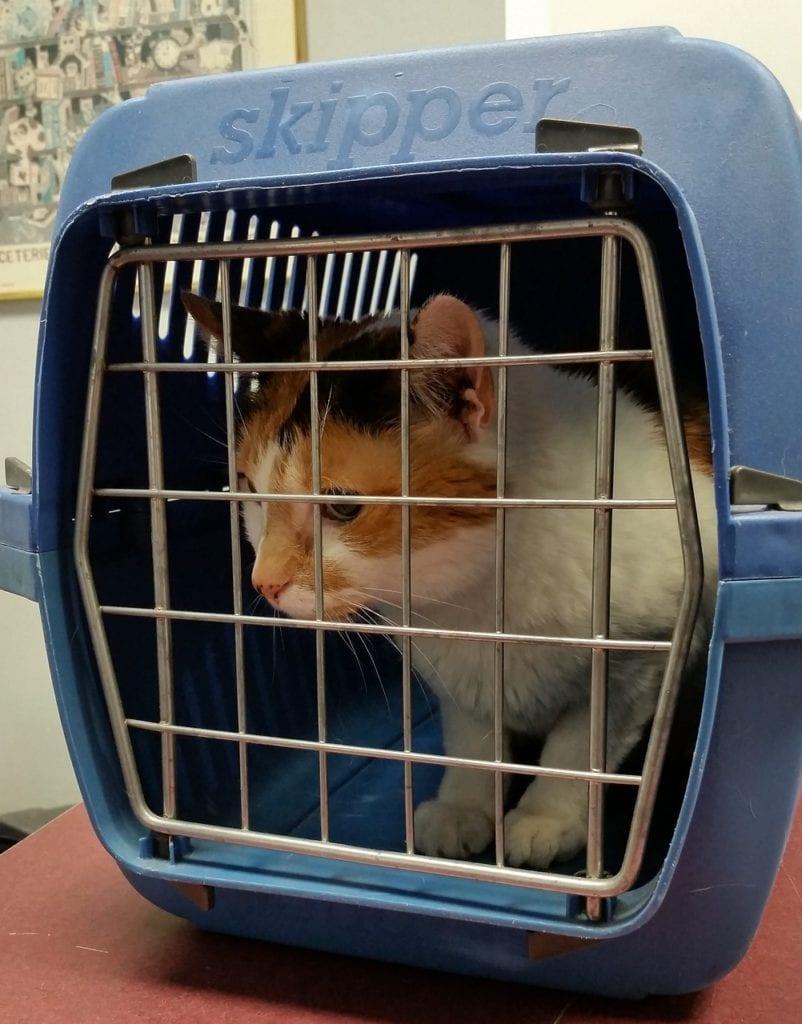 cat inside carrier
