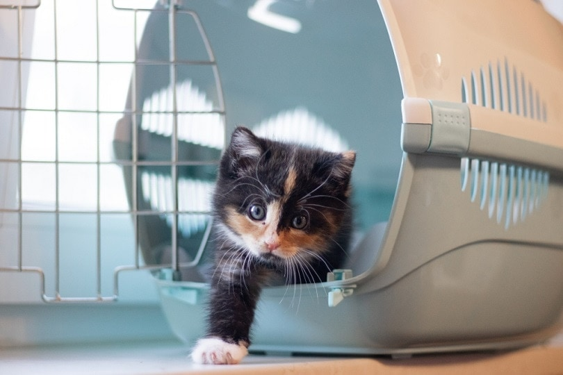cat sits in a carrier