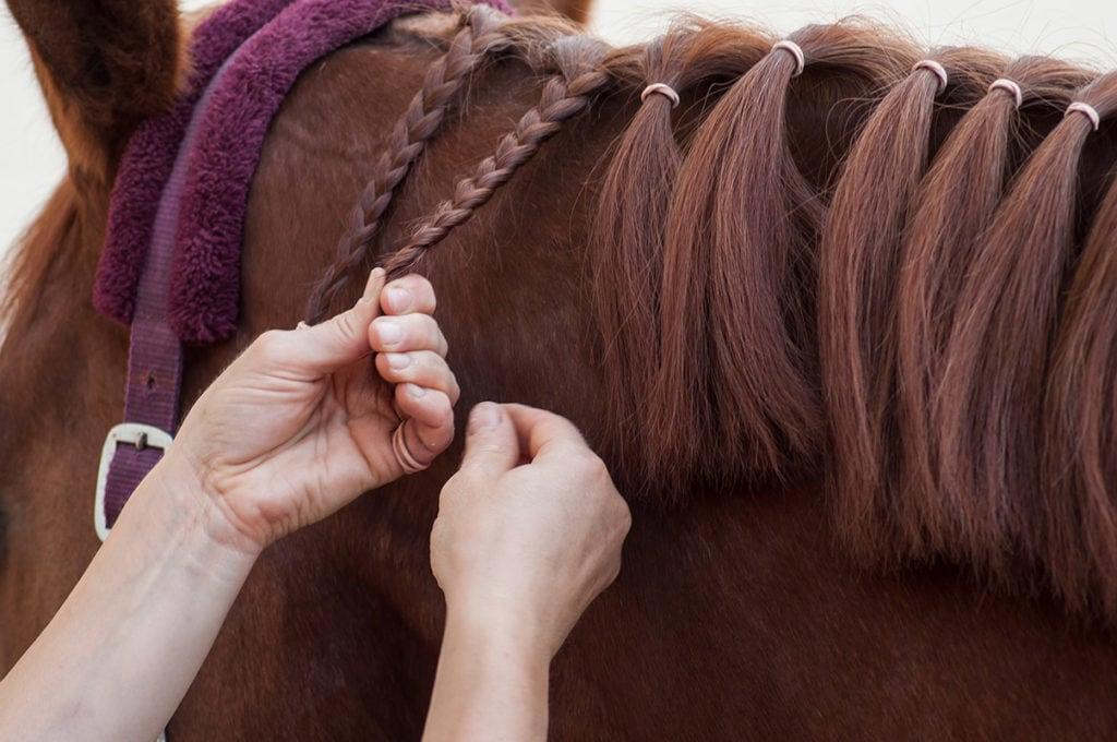 close up hand braiding a horse