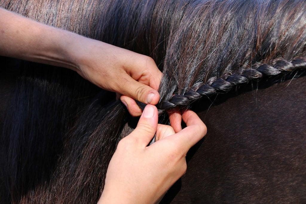 close up person braiding a horse