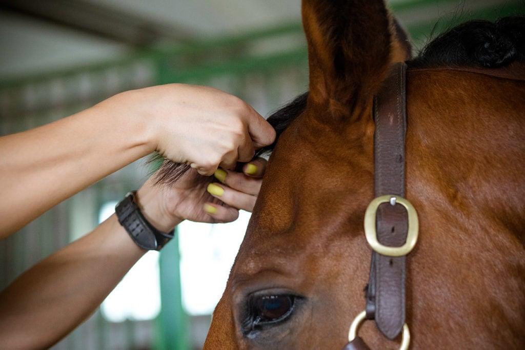 close up woman braiding a horse